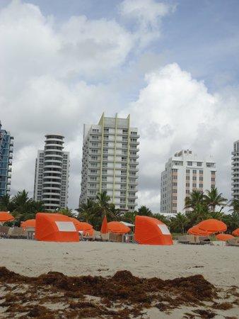 Royal Palm South Beach Miami, A Tribute Portfolio Resort: From the beach