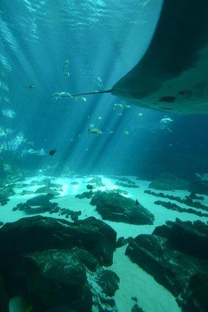 Georgia Aquarium 2