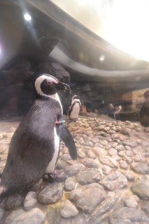 Georgia Aquarium 4