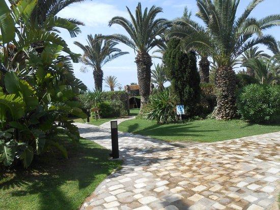 SENTIDO Phenicia: Path from pool area to beach