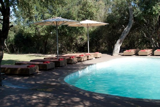 Tanda Tula Safari Camp : Pool