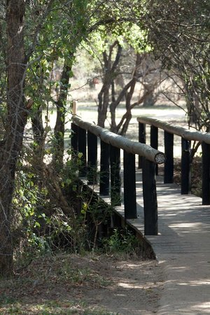Tanda Tula Safari Camp: Path to tents