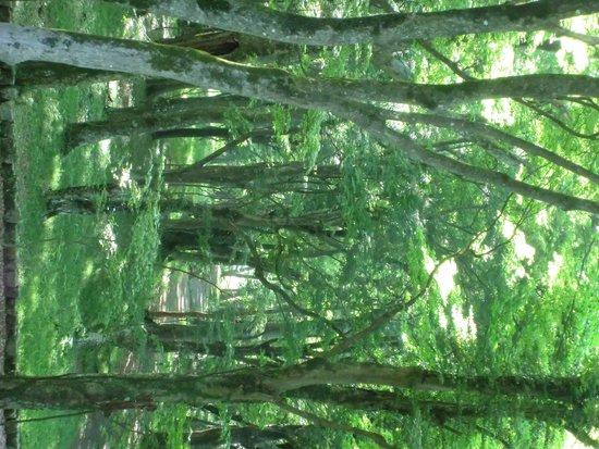 Ashinoko Camp Mura: グリ-ンの林- さわやかです!