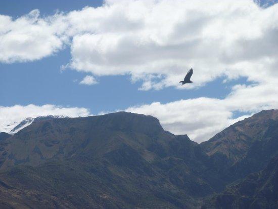 Colca Lodge Spa & Hot Springs - Hotel: Avistamiento de los condores