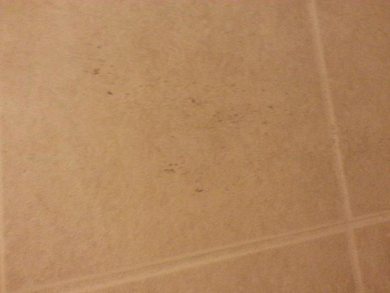 Kings Inn Motel: body hair on shower wall.