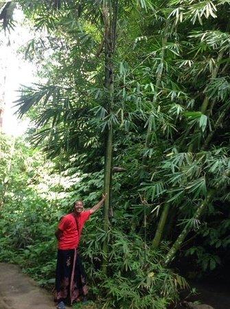 Bali Tradition: notre guide inoubliable Gusti senior