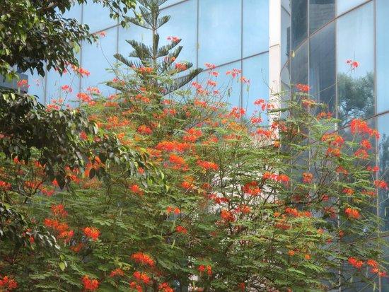 juSTa Off MG Road, Bangalore: Blick aus meinem Fenster.