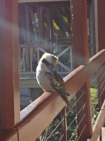 Q Station Sydney Harbour National Park Hotel : Visitor to the verandah