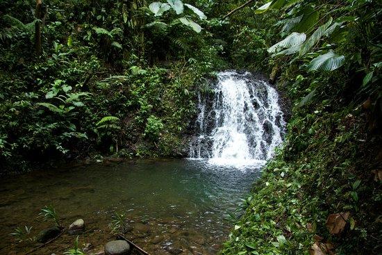San Jorge Eco-Lodge & Botanical Reserve: Pristine waterfalls at Milpe