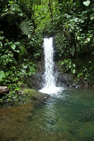 San Jorge Eco-Lodge & Botanical Reserve: One of the many pristine waterfalls at Milpe