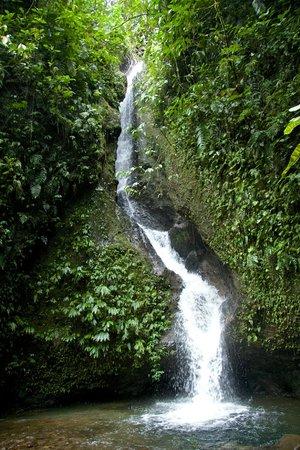 San Jorge Eco-Lodge & Botanical Reserve: Pristine waterfalls