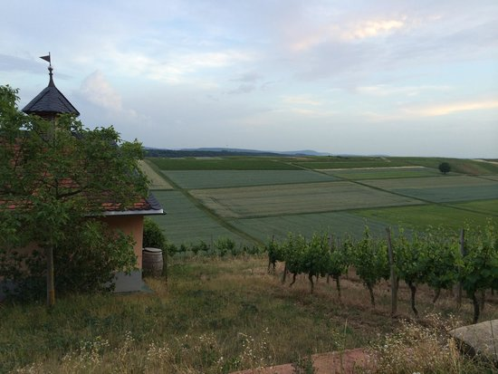 HEINRICHs: View from their vineyard
