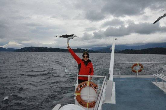 Bosque de Los Arrayanes: Alimentando as gaivotas.