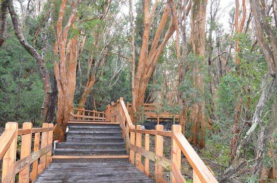 Bosque de Los Arrayanes: Bosque dos arrayanes.