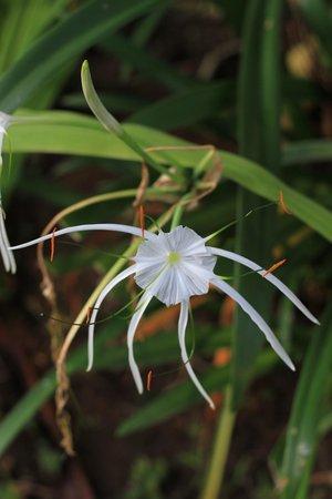Alam Shanti: Cool flower?