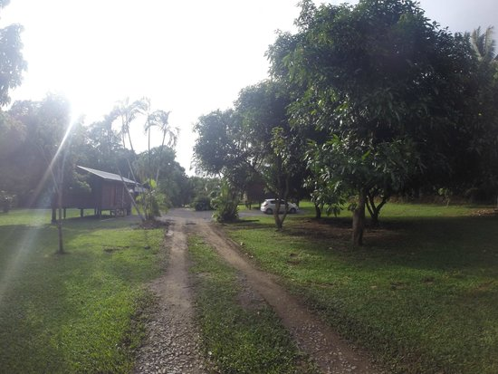Daintree Rainforest Bungalows: Driveway