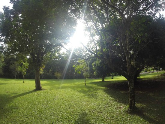Daintree Rainforest Bungalows: Beautiful grounds with fruit trees