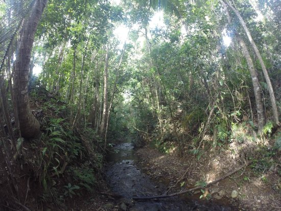 Daintree Rainforest Bungalows: Lovely small creek at back of property
