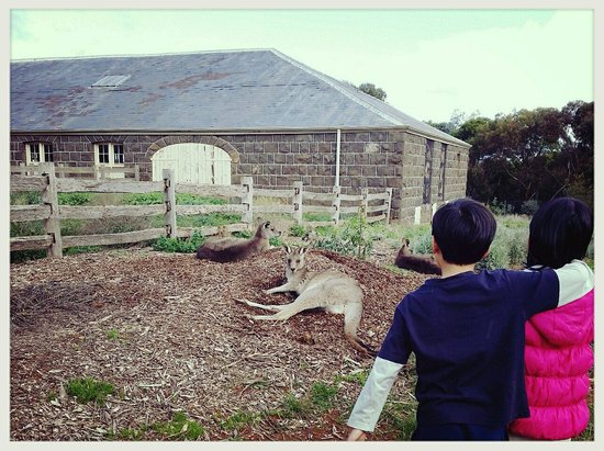 Werribee Open Range Zoo: That's how close we got to the kangaroos