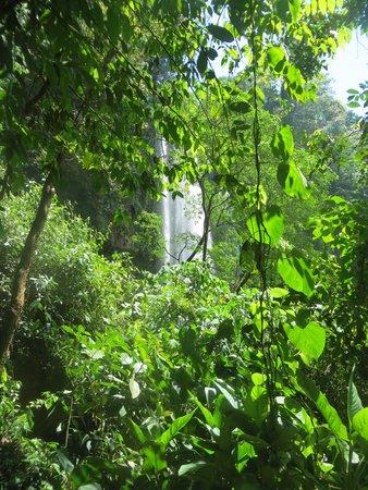 Cascadas de Misol-Ha : waterfall