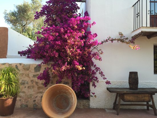 Agroturismo Can Pere Sord: Details