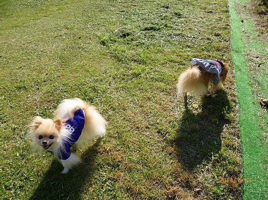 Towa Pure Cottage: ワールドカップ中なので二女も。
