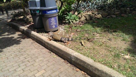 Jardin Botanico de Medellin : An iguana!