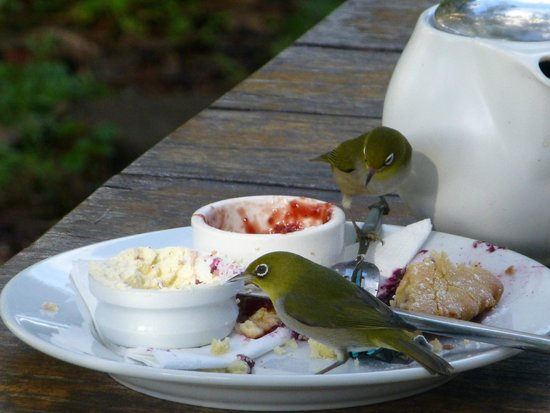 Cottage Cafe at The Berry Farm: Lovely finches