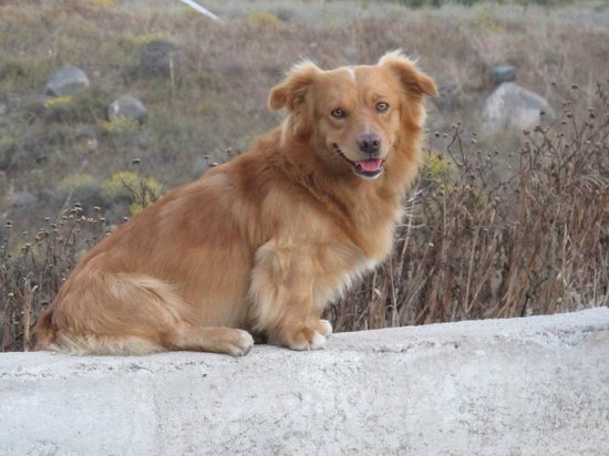 Aegean Divers Dive Center - Day Excursions: OUR DOG - DIAS the god of the gods ( from our Mythologi)