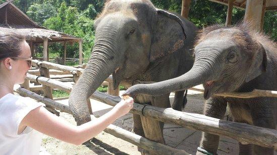 Thai Elephant Conservation Center: Madre y bebé comiendo.