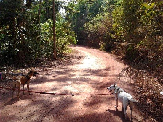 Lanta Animal Welfare : Walking to the river