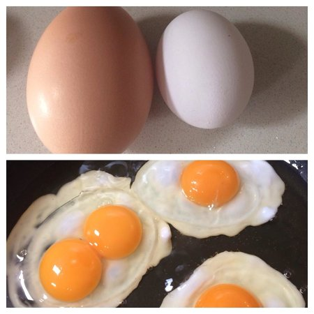 Balcony House Bed and Breakfast: Double yoke from huge egg.