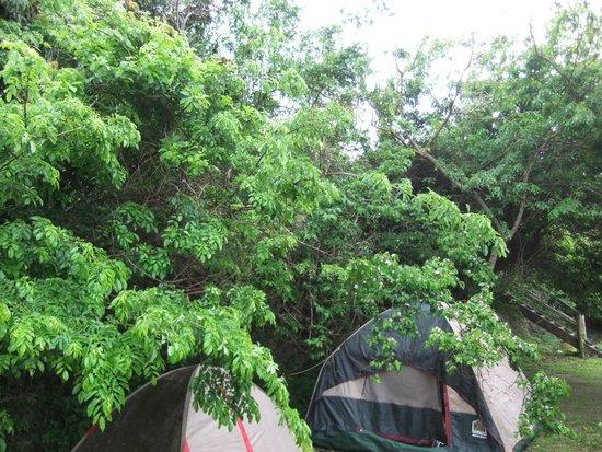 Amapondo Backpackers Lodge: Campsite