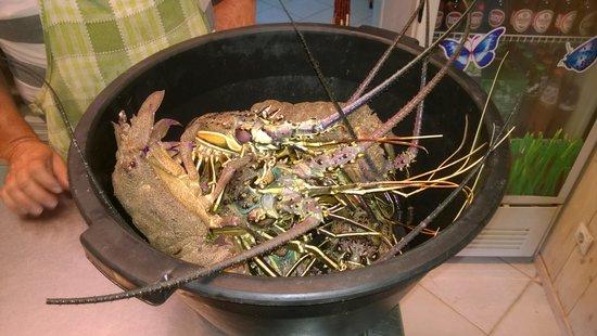 Marea Restaurant: Aragoste vive!