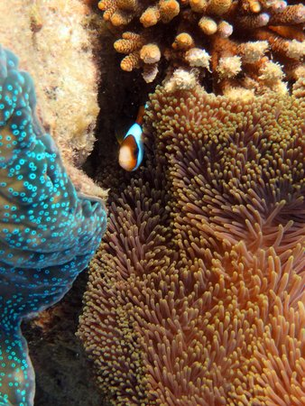 Passions of Paradise Reef Tour: Playing peekaboo with Nemo!