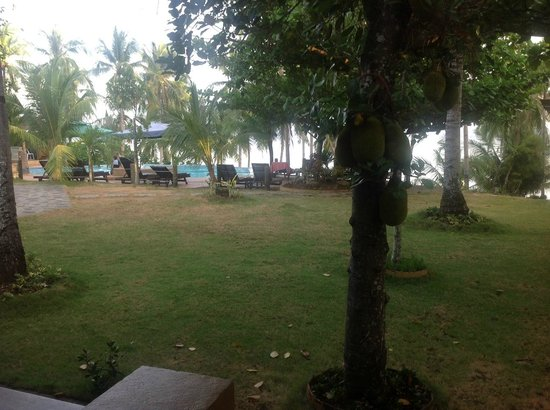 "Anda White Beach Resort : View from the ""oceanview"" room"