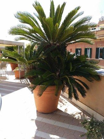 Domus Carmelitana: hotel terrace