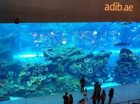 The Dubai Mall : Indoor Aquarium, Dubai Mall.