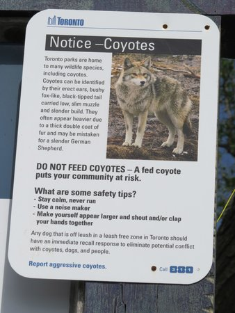 Centre Island: Coyote sign at Wards Island
