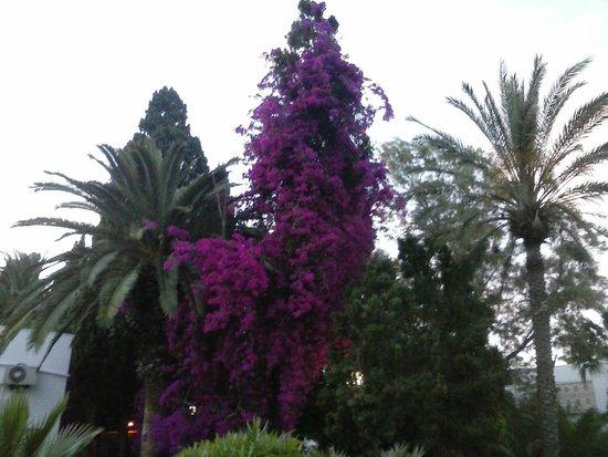 The Orangers Beach Resort & Bungalows: Des plantes partout!