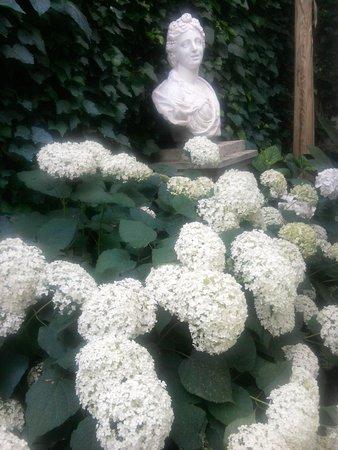 Villa Theresa Bed & Breakfast: withe hidrangeas cloud  in the garden