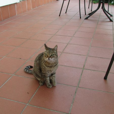 Agriturismo Fuccioli II: One of their very friendly cats