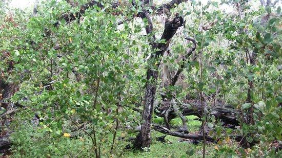 Cabbage Key Inn: Natuur