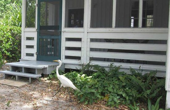 Cabbage Key Inn : natuur