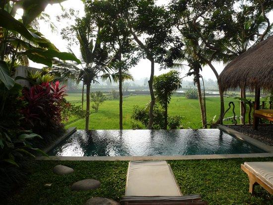 Ubud Padi Villas: vue de la terrasse