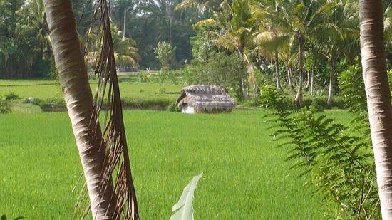 Ubud Padi Villas: vue de la piscine privé