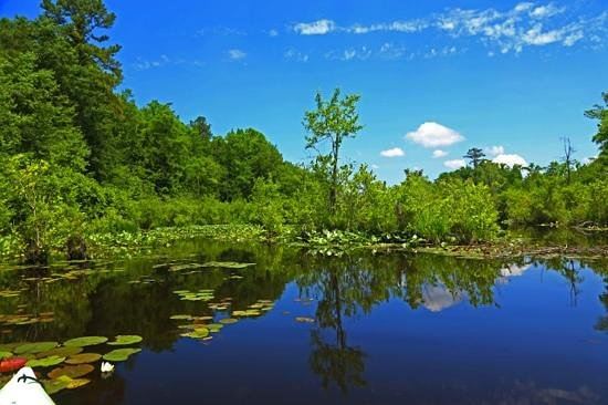 Fayetteville, NC: Hidden Beauty! The other side of Lake Rim