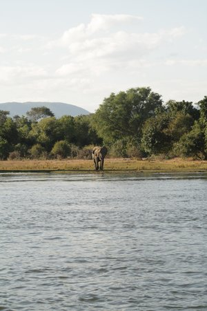 Mvuu Lodge : The view from our boat