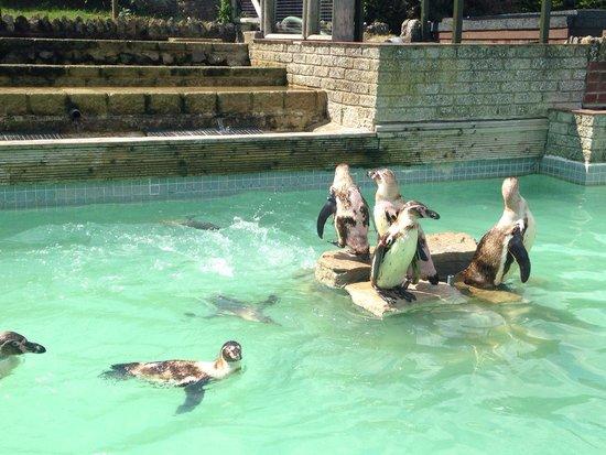 Seaview Wildlife Encounter: Penguins at feeding time
