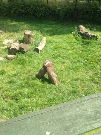 Seaview Wildlife Encounter: Otters play fighting
